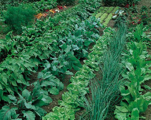 Glenn's Garden